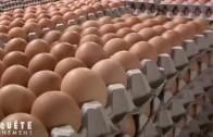D'où viennent les œufs que nous mangeons ?